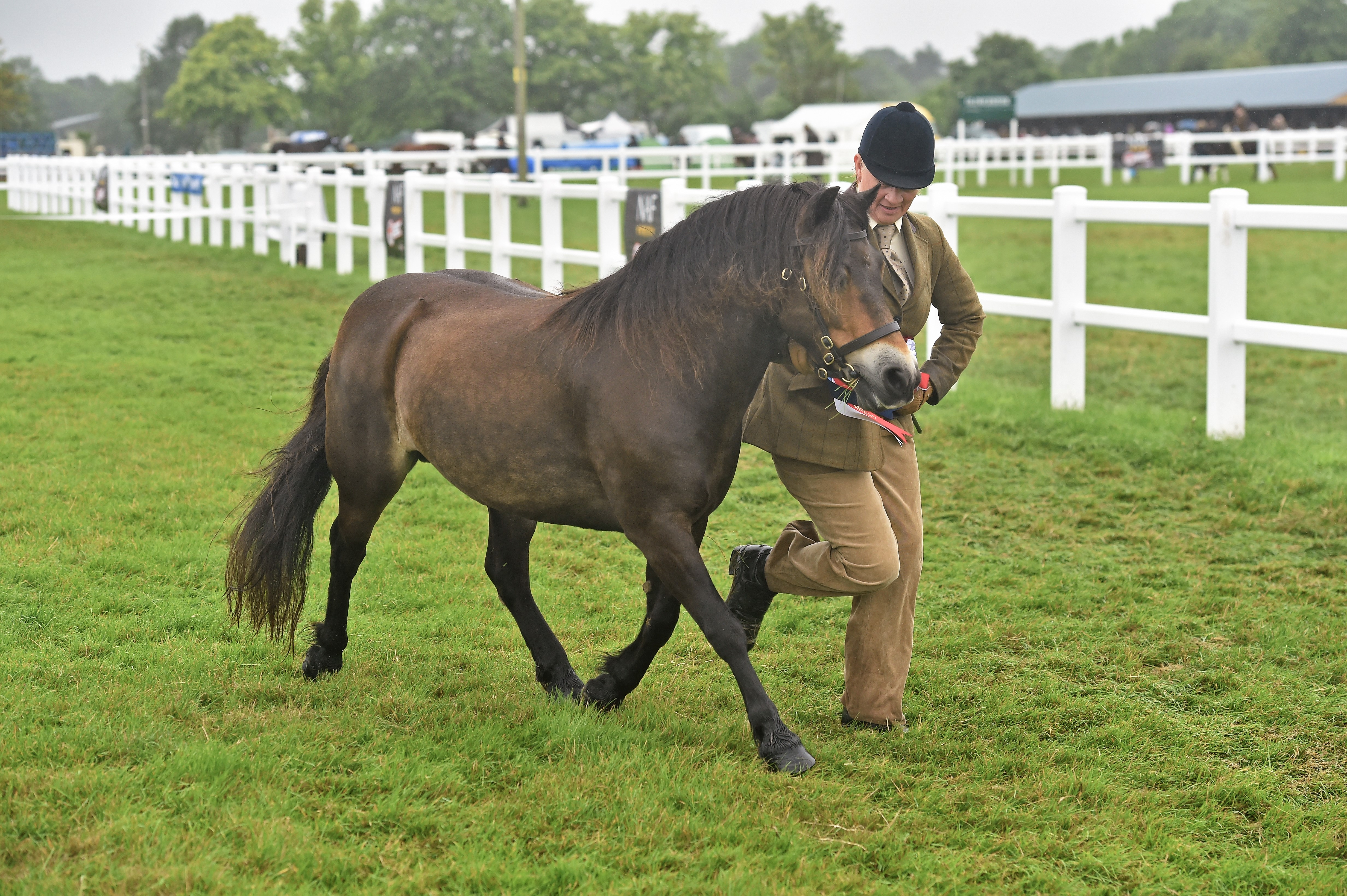 Equine Influenza vaccinations at Summer Champs